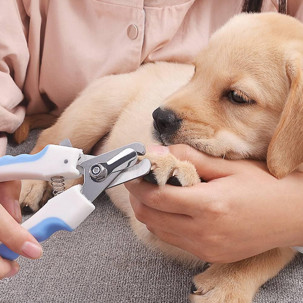 Как ухаживать за немецкой овчаркой: содержание в квартире и в частном доме, питание собаки, гигиенические процедуры и дрессировка