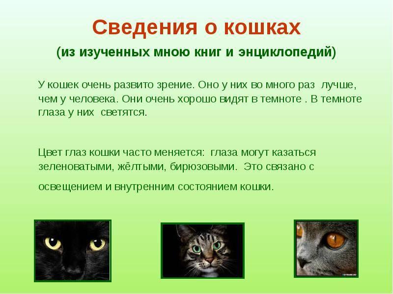 Интересные факты о кошках. 50 интересных фактов о кошках.
