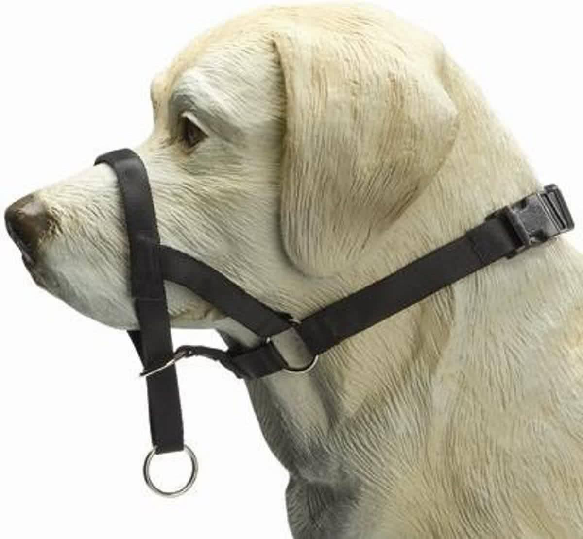 Уздечка и недоуздок для лошади: описание, фото