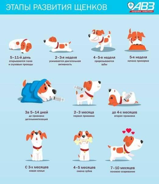 В каком возрасте лучше брать щенка — особенности до года