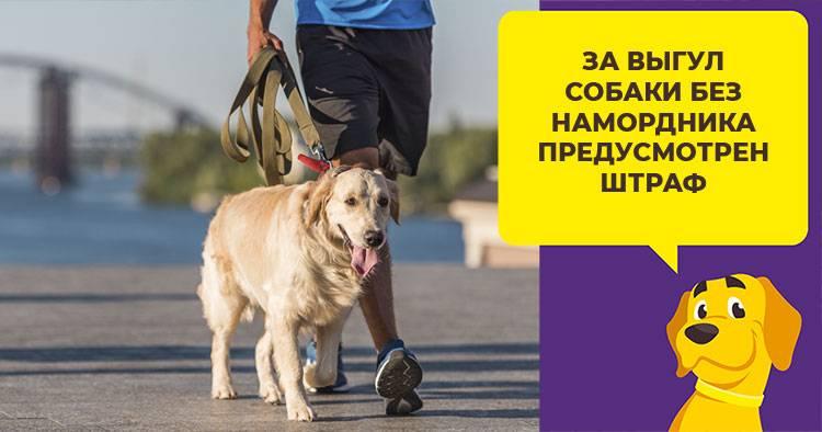 Закон о выгуле собак, что нужно знать о запретах и штрафах