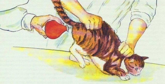 У кошки запор чем можно помочь в домашних условиях: лечение