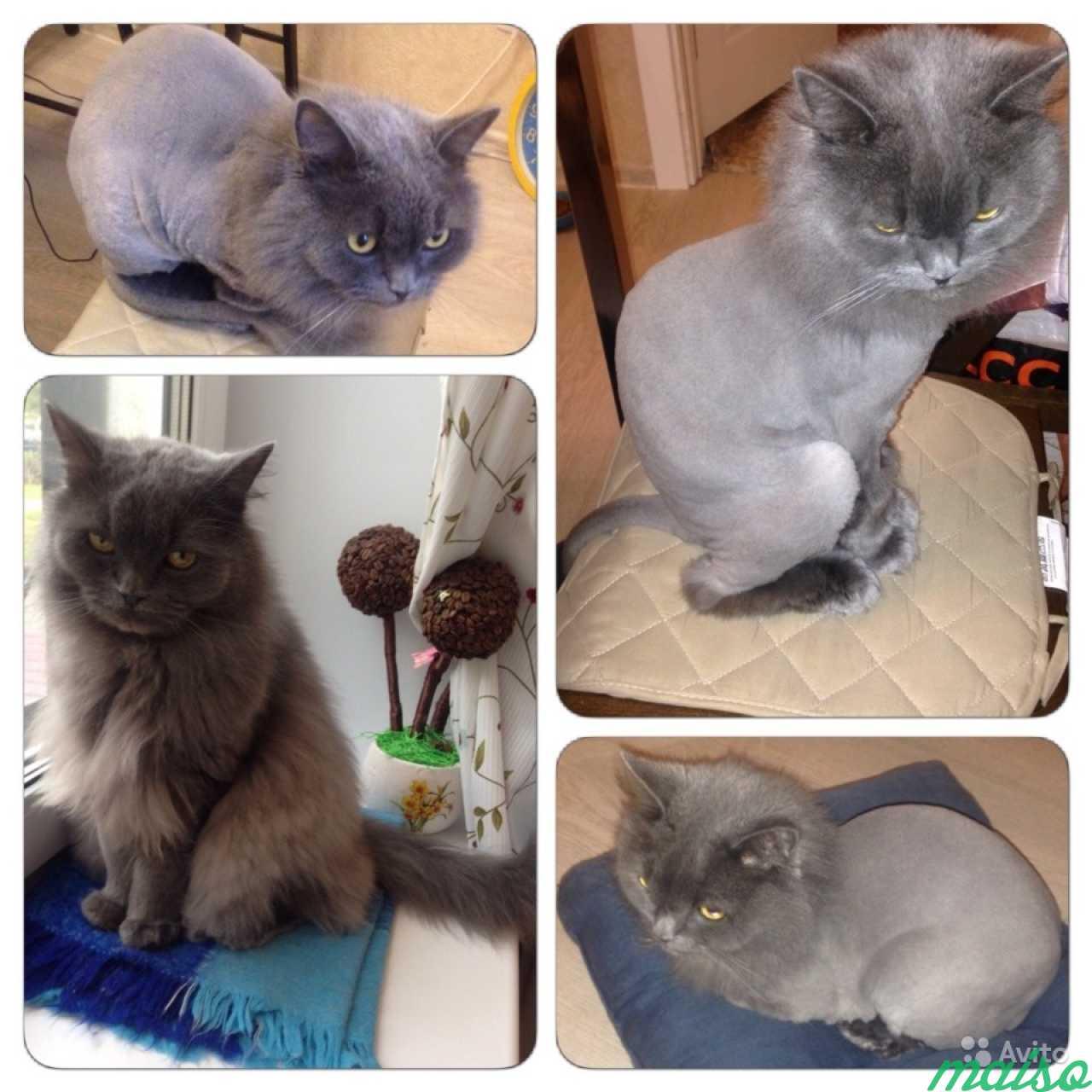 Как самостоятельно подстричь когти коту в домашних условиях