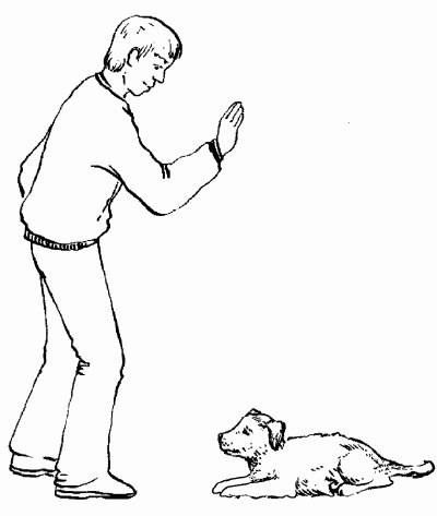 Учим щенка и собаку команде «сидеть» — советы кинологов ⋆ собакапедия