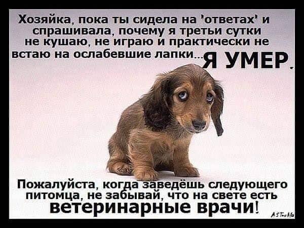 Вернется ли собака, которая потерялась или сбежала из дома? сможет найти дорогу обратно?