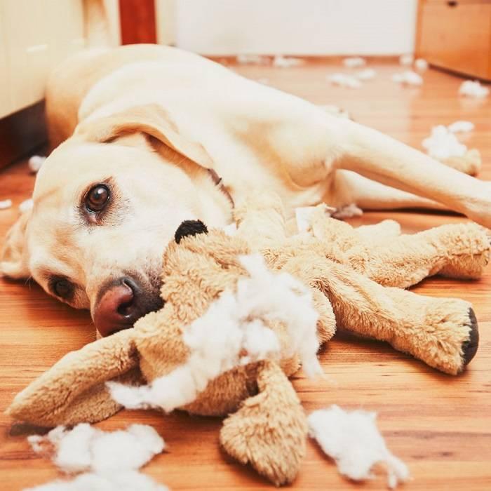 Деструктивное поведение собаки. что делать и как отучить?