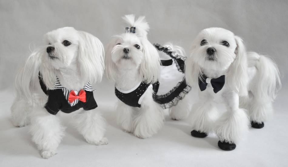 Какие собаки вошли в топ-5 самых непопулярных пород — 4 лапки