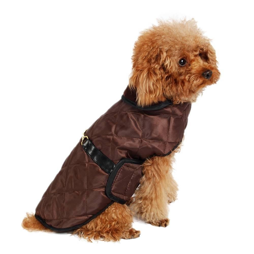 Нужна ли собакам одежда: мнение кинолога