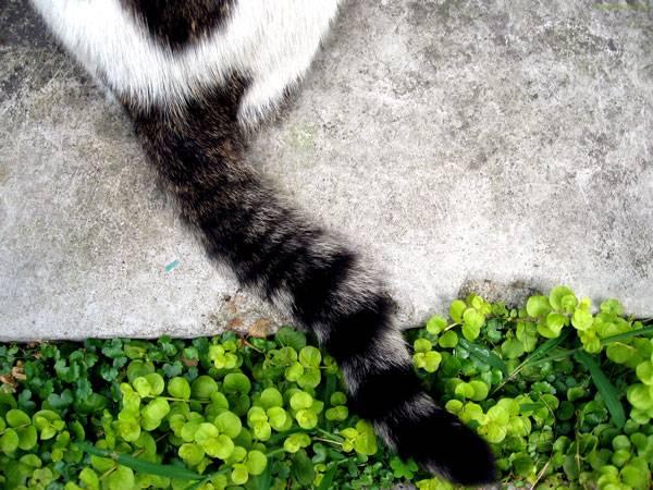 Кот трясет хвостом но не метит. что означает дрожащий хвост у вашей кошки? как узнать о самочувствии кошки по хвосту