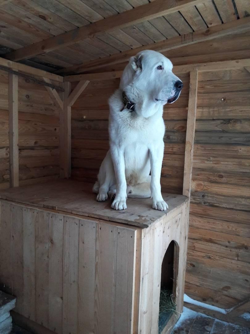 Как построить вольер для собаки своими руками - особенности конструкции и инструкция по изготовлению со схемами, чертежами, фото и видео