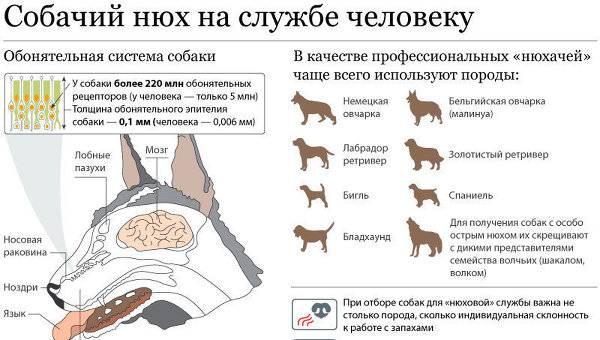 Собака хрюкает - причины, симптомы заболеваний и норма