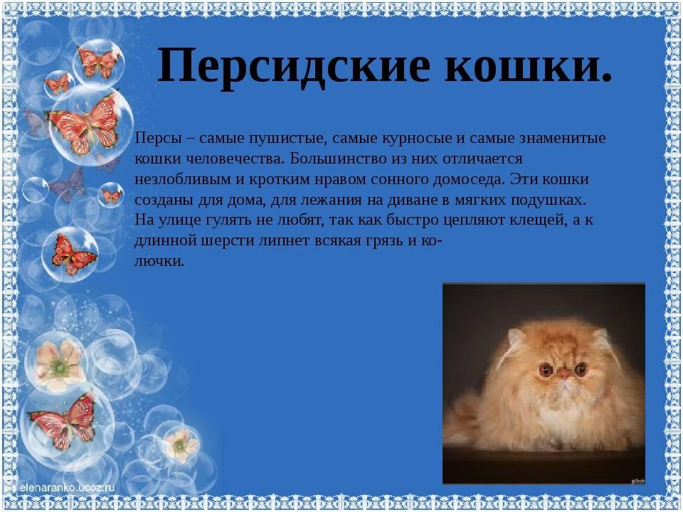 Сколько живут персидские кошки в домашних условиях – как продлить срок жизни животных