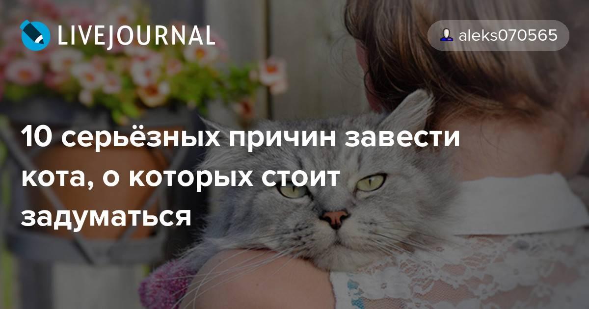 Как подружить кошек в квартире
