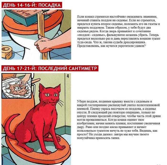 Как приучить котенка к рукам: причины страха и способы обучения