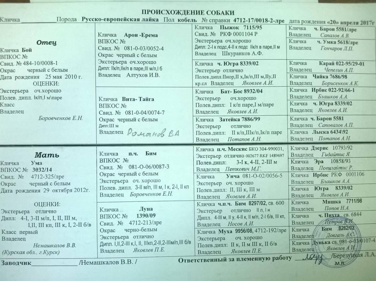 Клички русско-европейской лайки - oozoo.ru