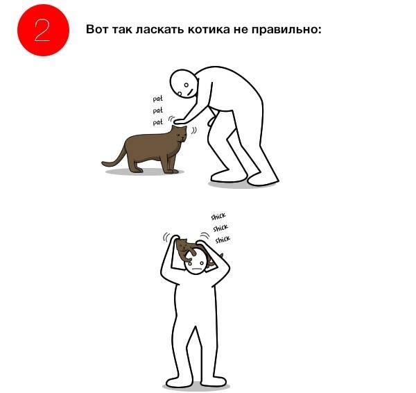 Какие поглаживания предпочитают кошки. как правильно гладить кошек где гладить кошку чтобы ей нравилось - новая медицина