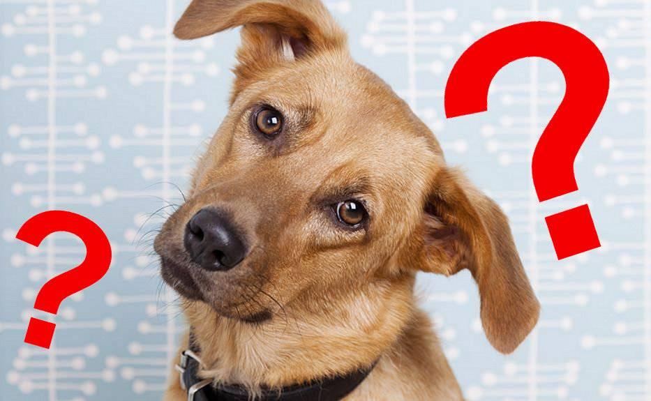 Почему собака наклоняет голову, когда к ней обращаются | ваши питомцы | яндекс дзен
