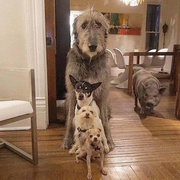 В какие приюты можно отдавать собак навсегда и как это сделать правильно