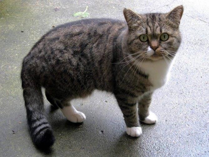 Кошка или кот гадит в неположенном месте: методы отучения от пагубной привычки