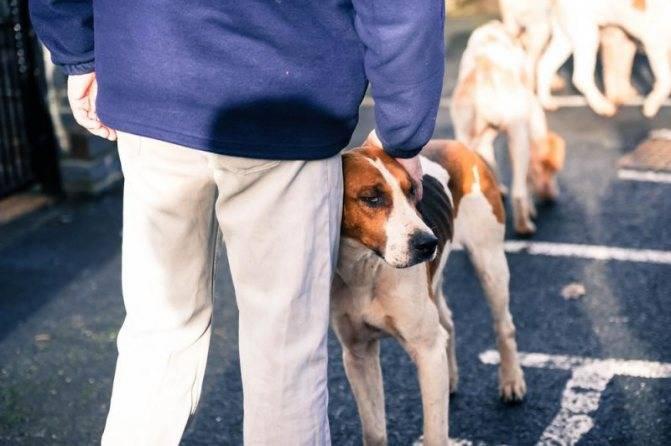 Как не бояться собак: инструкция, как побороть страх