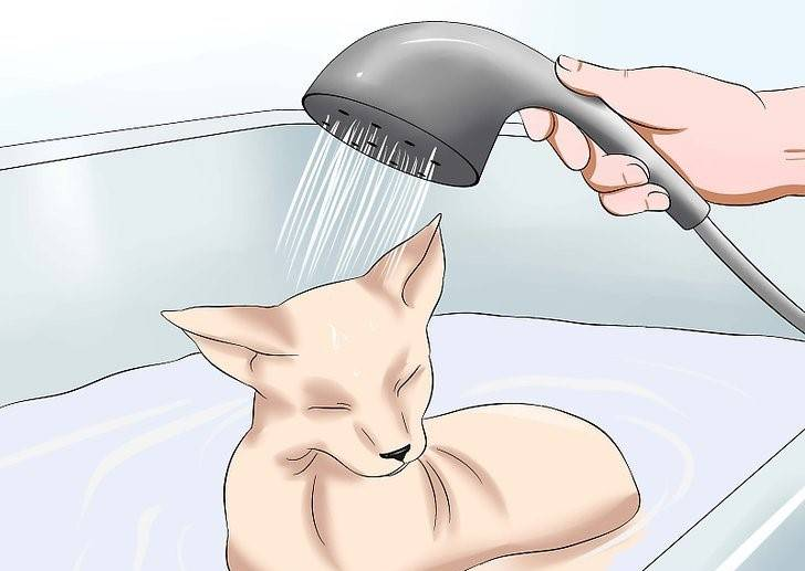 Частота купания собак и щенков с применением шампуней: можно ли каждый день
