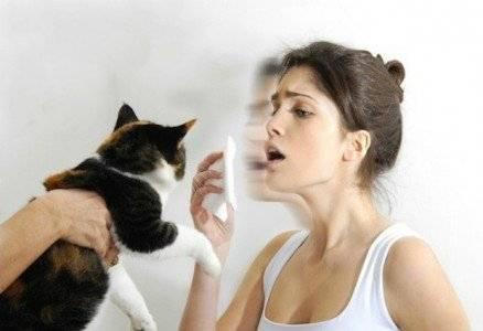 Можно ли навсегда избавиться от аллергии на кошек и как вылечить ее последствия?