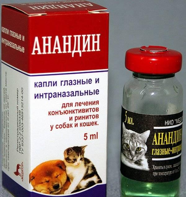 Чем лечить насморк у кота в домашних условиях: что делать, капли при лечении насморка