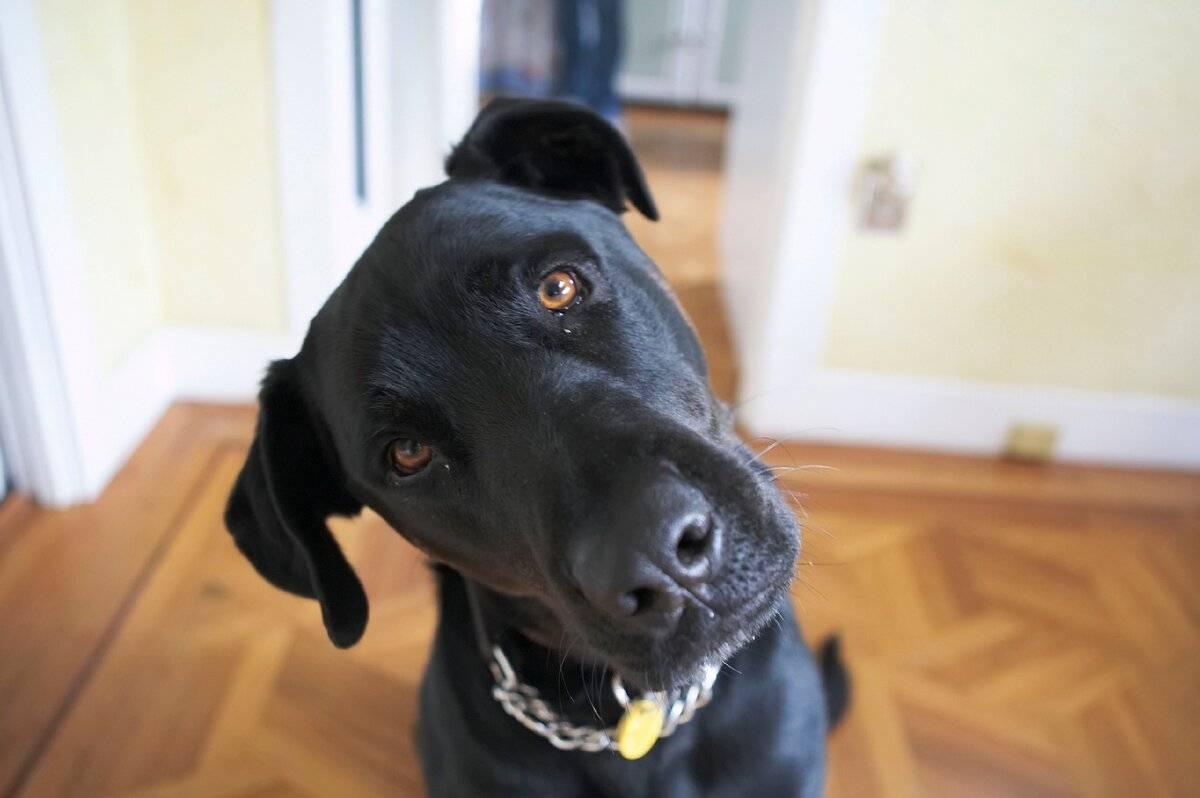 Почему собаки наклоняют голову, когда с ними разговаривает человек | новости apple. все о mac, iphone, ipad, ios, macos и apple tv