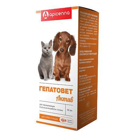 Гепатовет для кошек: инструкция, отзывы, цена | сайт «мурло»