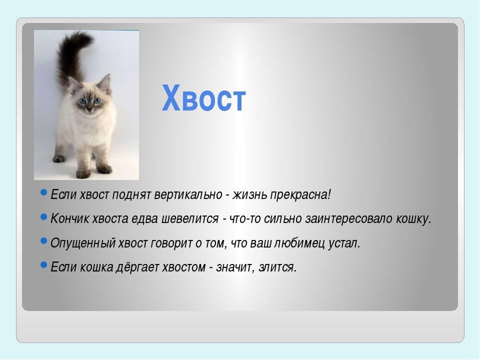 ᐉ почему кошка дрожит всем телом, кот трясется как будто замерз - zoomanji.ru