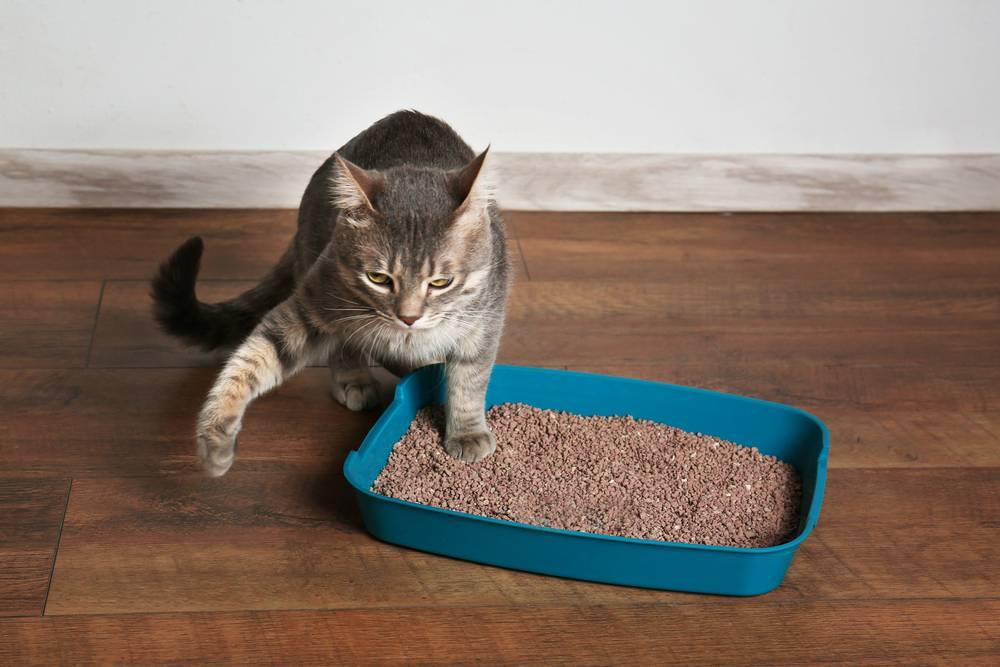 Почему кошки после того, как поедят, закапывают еду и скребут пол рядом с миской?