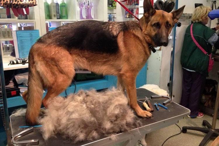 Выпадает шерсть у собаки: возможные причины и лечение с фото и видео