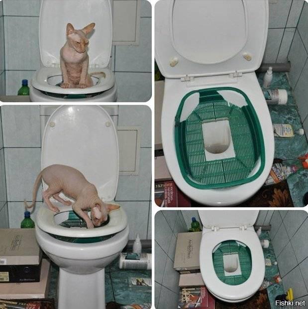 Сколько раз в день кот должен писать в норме, почему он редко ходит в туалет по-маленькому?