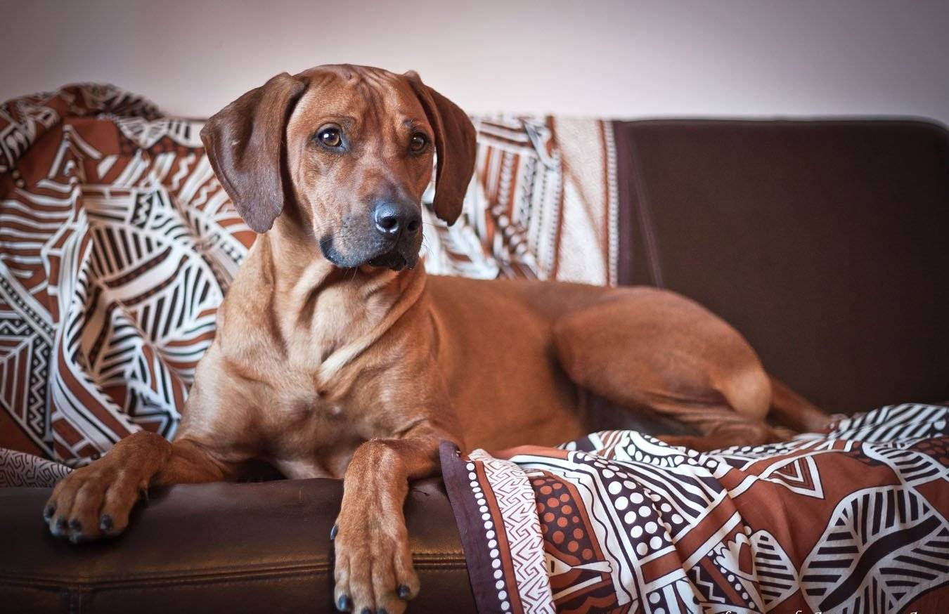 Собаки-компаньоны для квартиры и частного дома