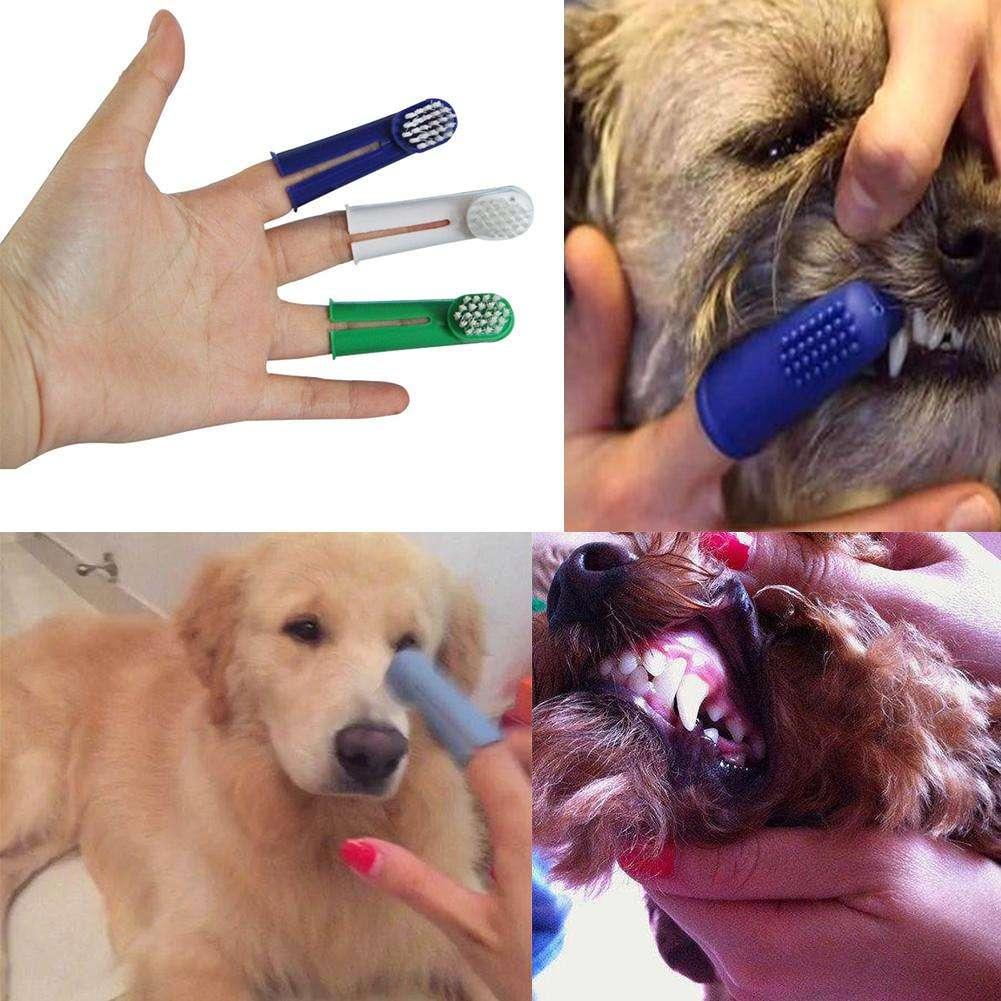 Как почистить собаке зубы в домашних условиях: чем чистить, советы