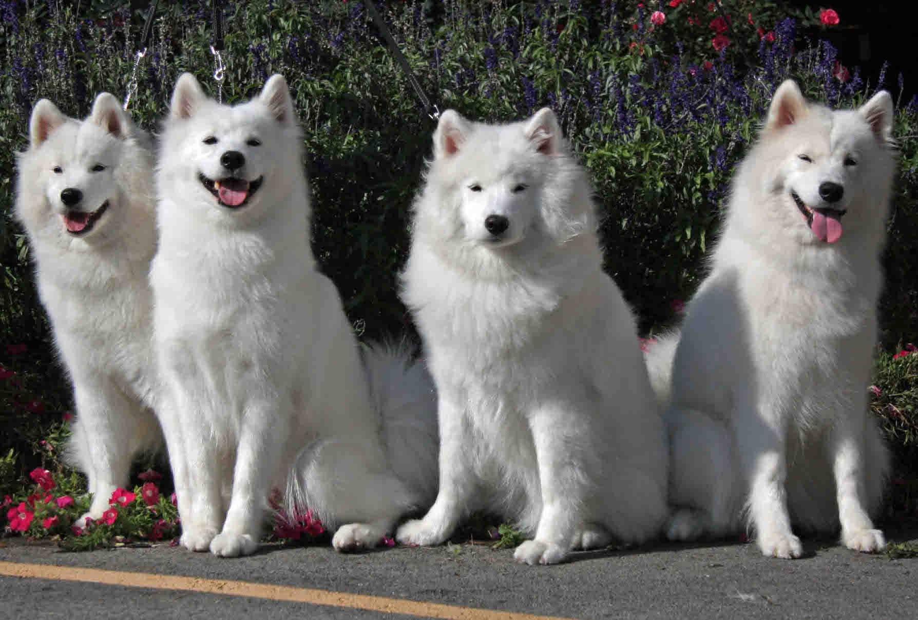 Признанные и непризнанные русские породы собак: названия, описание, фото