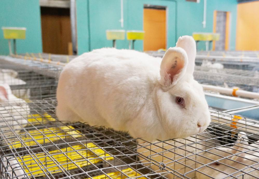 Бизнес на кроликах (ноябрь 2020) — vipidei.com