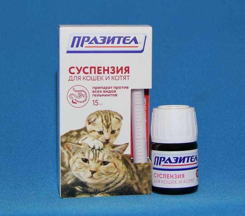 Глисты у котят: симптомы, признаки и лечение таблетками
