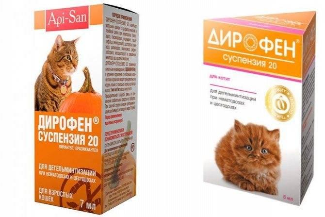 Инструкция — как дать коту таблетку от глистов