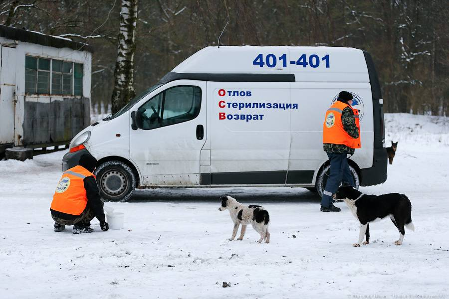 Бездомные собаки: куда обращаться, кто занимается отловом