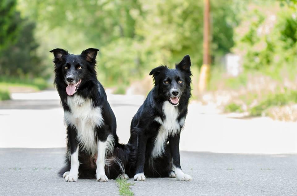 Самые умные породы собак — топ 10 с фото и названиями