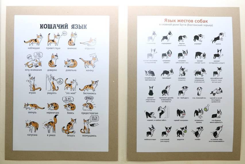 Советы по обучению собаки различным командам