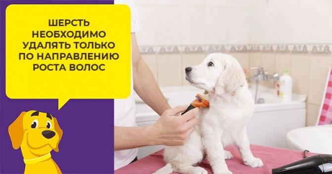 Фурминатор для собак: какой выбрать, где купить и как пользоваться