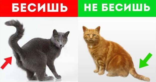 Несколько признаков того, когда кошка признаётся вам в симпатии…   обалденно