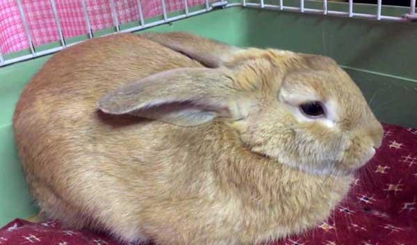 Спящий кролик (17 фото): сколько часов в сутки спят декоративные кролики? почему кролик спит днем с открытыми глазами? как должен спать кролик: сидя, на боку или на спине?