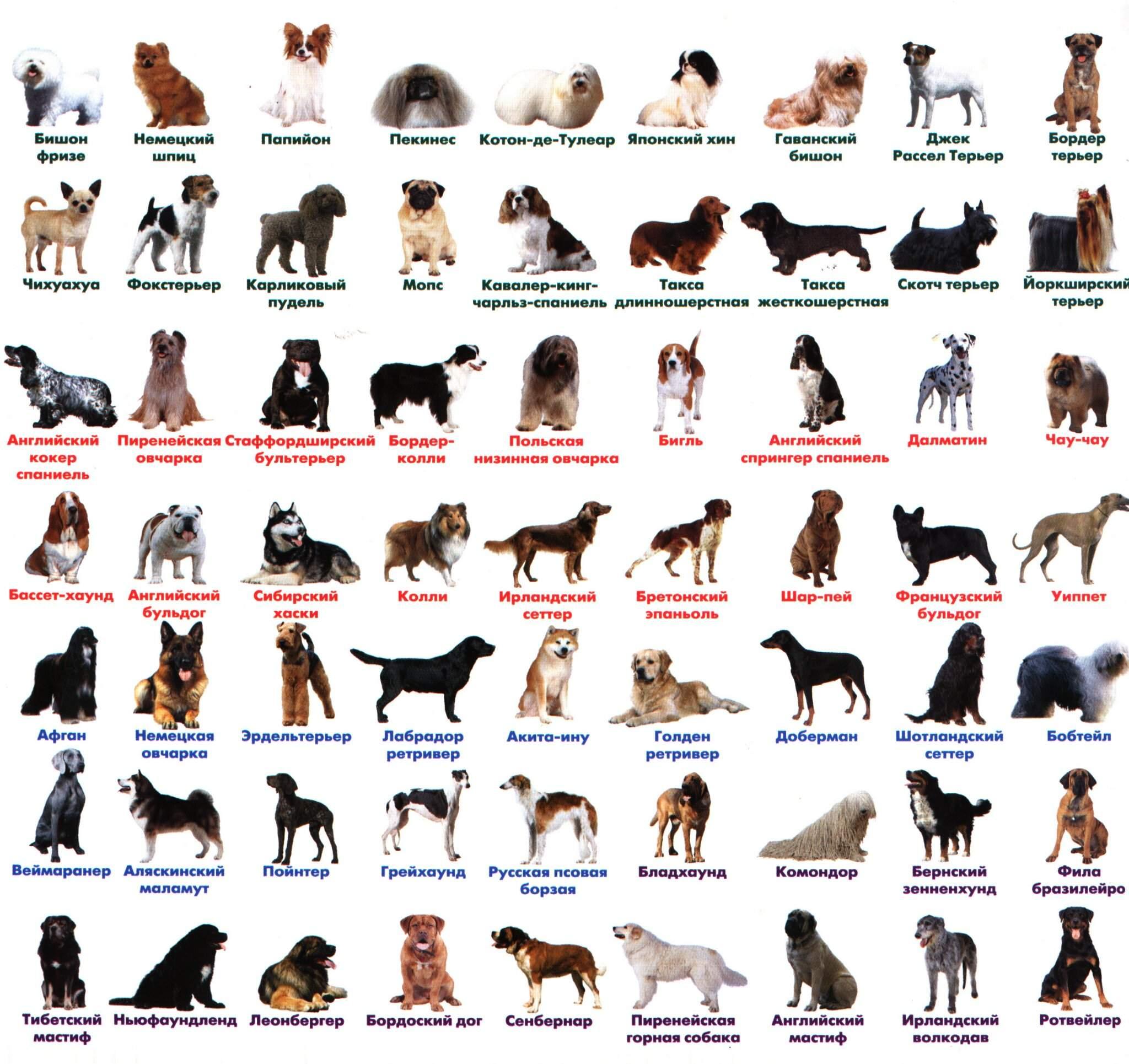 Сколько собак в мире. сколько пород собак существует в мире - wikihelpprostuda.ru