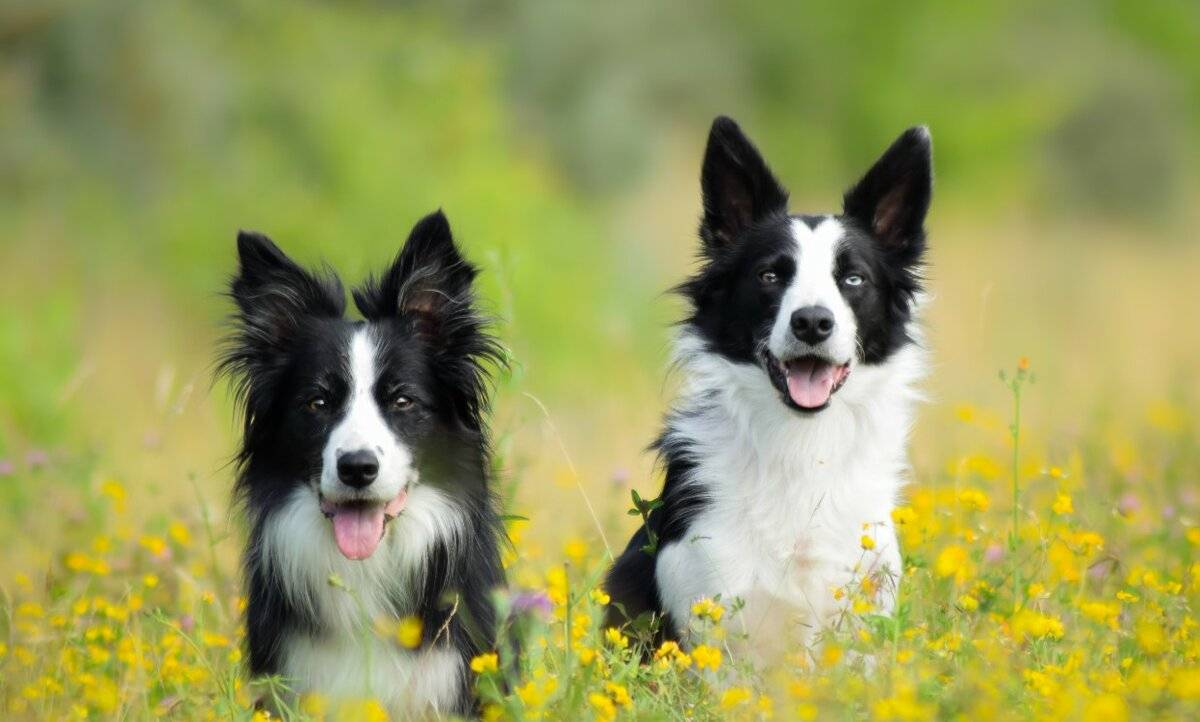 Топ 14 пород собак для похода - какую выбрать