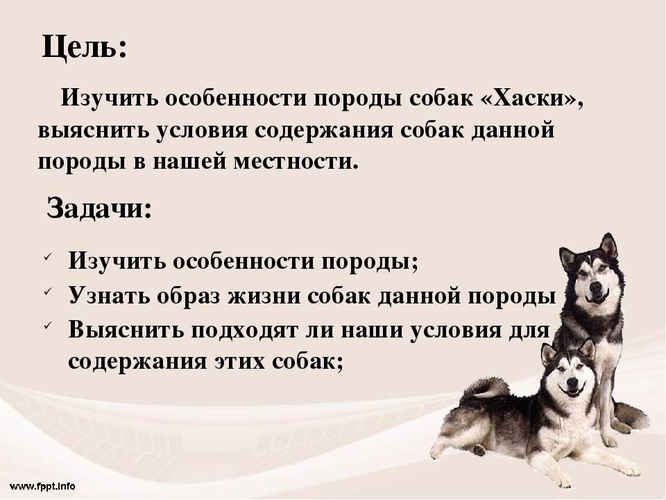 Научное описание собаки | кратко