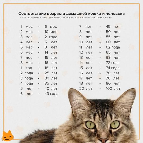 Как определить возраст кошки: по зубам, весу, шерсти, глазам | zoosecrets