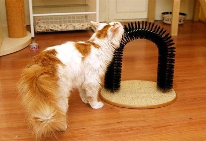 10 способов сделать когтеточку для кошки своими руками - лайфхакер